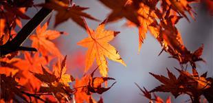 planes otoño