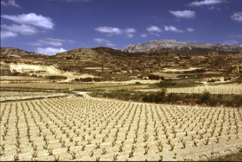 paisaje 1 agroturismo areta etxea en Alava