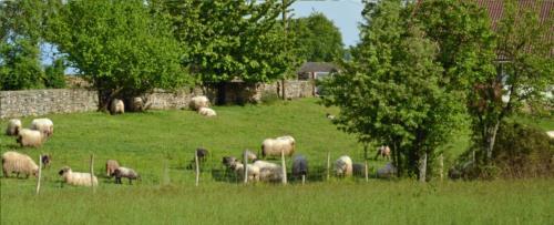 sheeps farm house gorbea bide in Alava