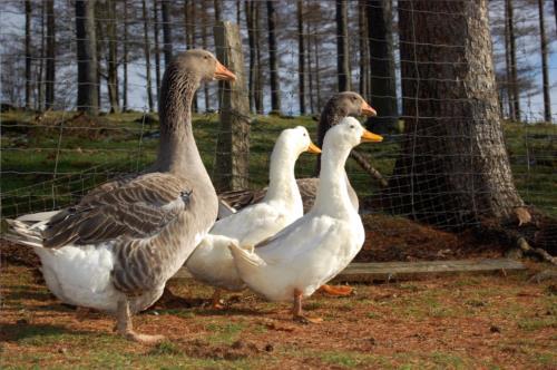 animales agroturismo Pagorriaga en Gipuzkoa