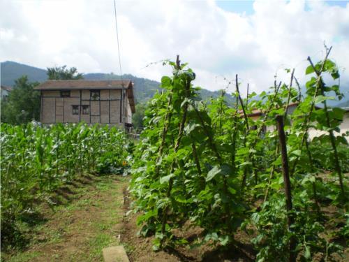 huerto agroturismo Ondarre en Gipuzkoa