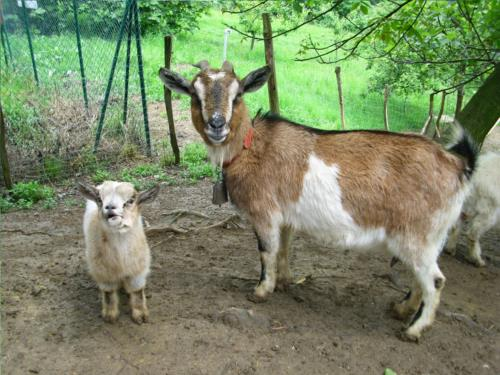 Animales agroturismo Laskin Enea en Gipuzkoa