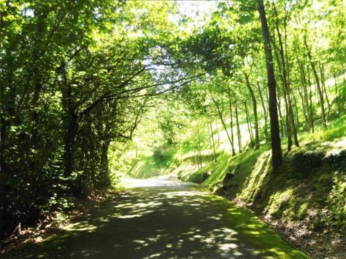 camino  casa rural magariaga Vizcaya