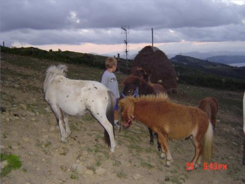 animales 1 agroturismo Maddiola en Gipuzkoa