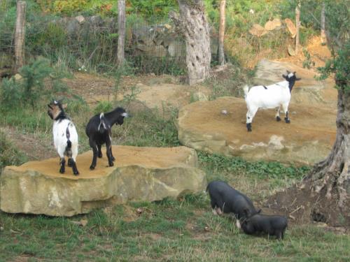 animales agroturismo Maddiola en Gipuzkoa