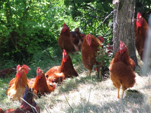 animales agroturismo Enbutegi en Gipuzkoa