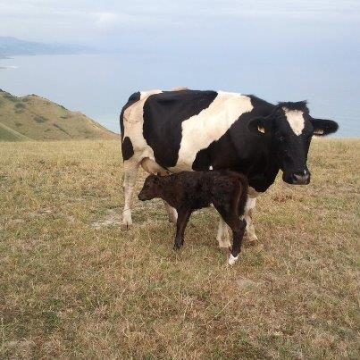 animales agroturismo Santa Klara en Gipuzkoa
