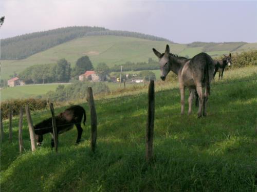 Animales 1 agroturismo Kasa Barri en Bizkaia