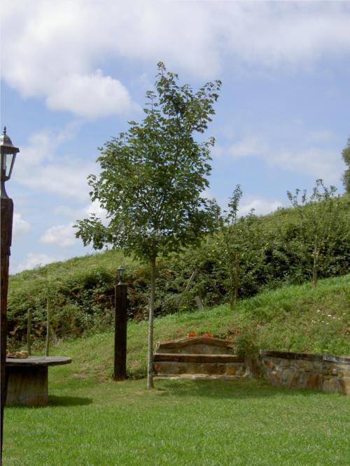 jardín 2 agroturismo Goiena en Bizkaia