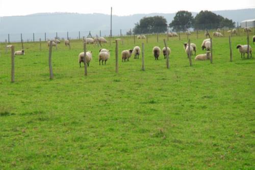 animales casa rural Oraindi en Bizkaia