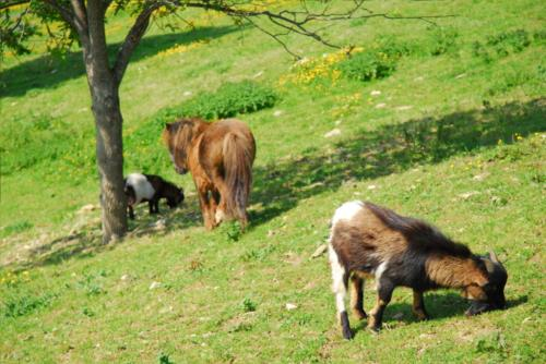 animales agroturismo Kortazar en Gipuzkoa