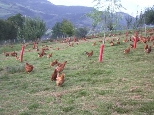 animales agroturismo larraxko en gipuzkoa