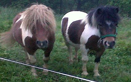 animales casa rural Eguzkilore en Bizkaia