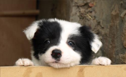 perro agroturismo ibarrolabekoa en gipuzkoa