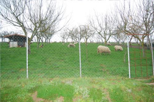 animales agroturismo Olagi en Gipuzkoa