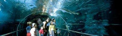 San Sebastian Aquarium-Oceanography Museum