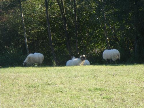 animales casa rural Matsa en Bizkaia