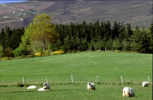 sheep farm house adela etxea in Alava
