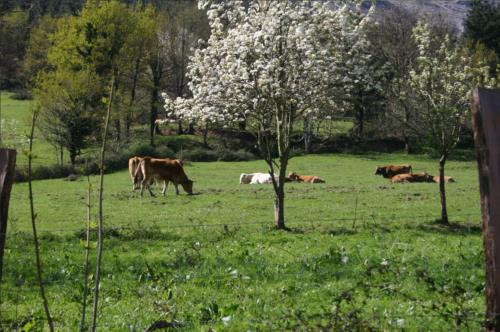 animals country house olazabal azpikoa in Bizkaia