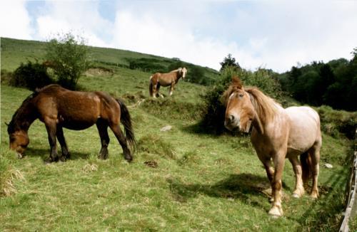 caballos agroturismo agerresoro haundi en gipuzkoa