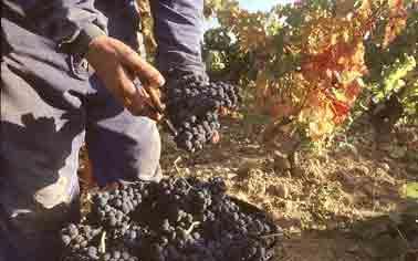 viñedo agroturismo señorío de las viñas en Alava