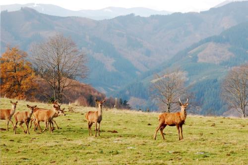 animales 6 agroturismo Pagorriaga en Gipuzkoa