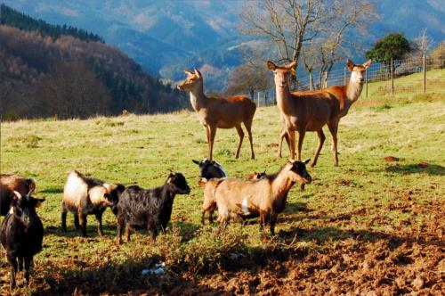 animales 5 agroturismo Pagorriaga en Gipuzkoa