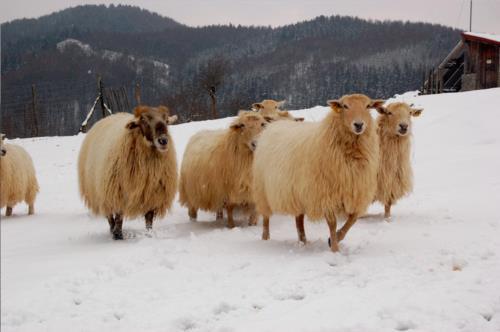 animales 1 agroturismo Pagorriaga en Gipuzkoa