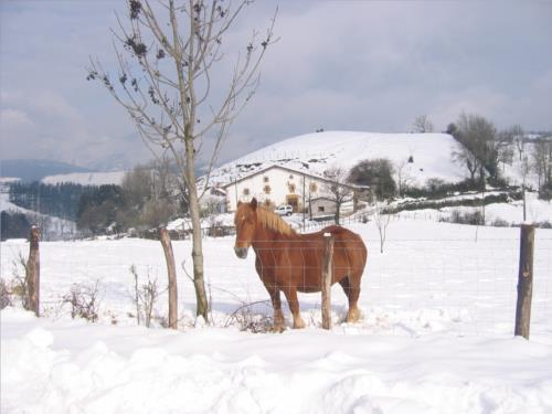 animales casa rural Mitarte Garai en Gipuzkoa