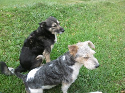 perros agroturismo azkue en gipuzkoa