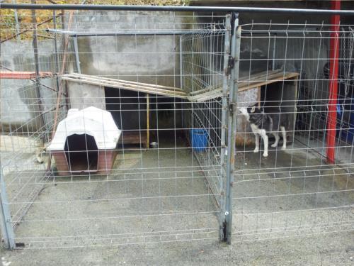 animals country house ordaola in Bizkaia