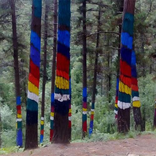 Bosque de oma a 40 km del Caserio