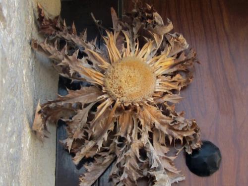 flor agroturismoa abaienea en Alava