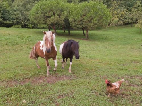 animales agroturismo artizarra en gipuzkoa