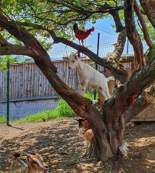 Animales de Santa Klara