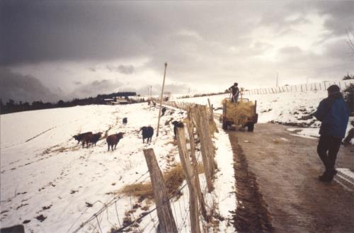 landscape farm house perlakua saka in Gipuzkoa