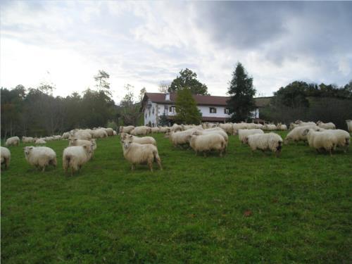 animales 1 casa rural Iragorri en Gipuzkoa
