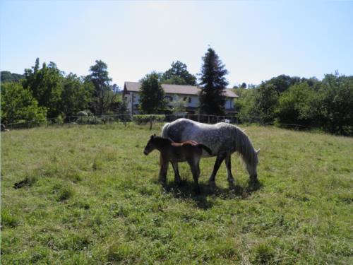 animals country house iragorri in Gipuzkoa