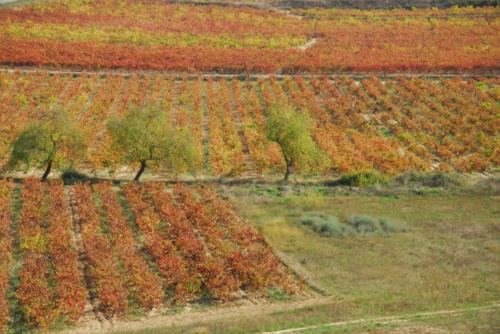 paisaje casa rural vinea et oliva en Alava