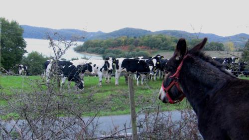 donkey farm house atxarmin in Alava