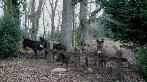 donkey 1 farm house atxarmin in Alava