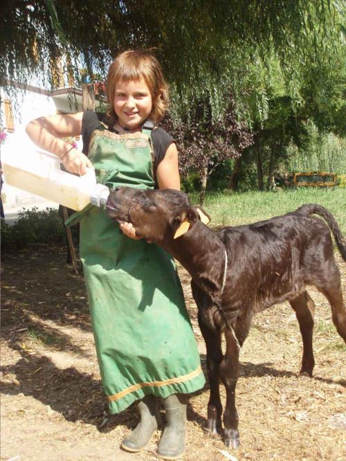 animals  farm house zubeltzu torre in Gipuzkoa