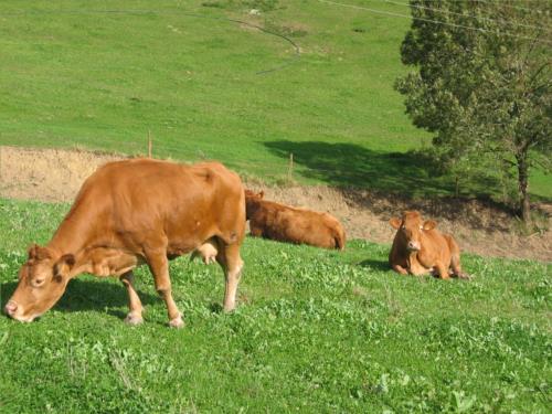 vacas casa rural landarbide zahar 2 en gipuzkoa