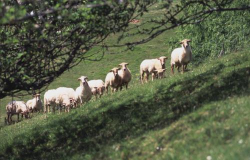 sheeps farm house ziasoro in Gipuzkoa