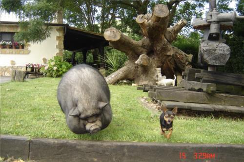 animales casa rural Jesuskoa en Gipuzkoa