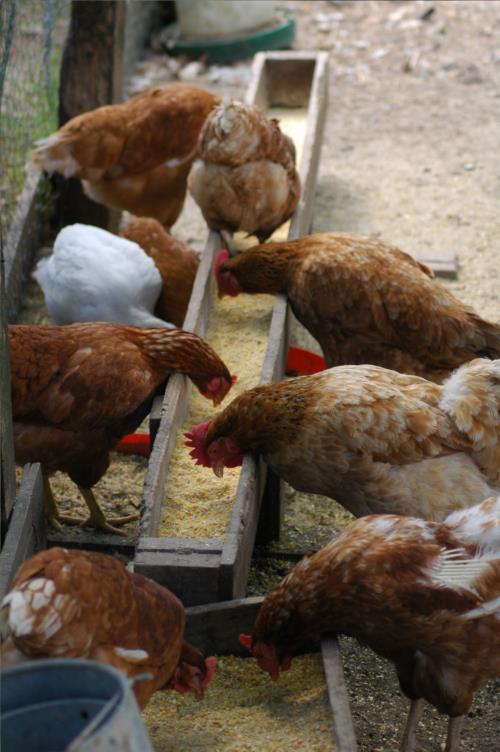 animales 2 casa rural Jesuskoa en Gipuzkoa