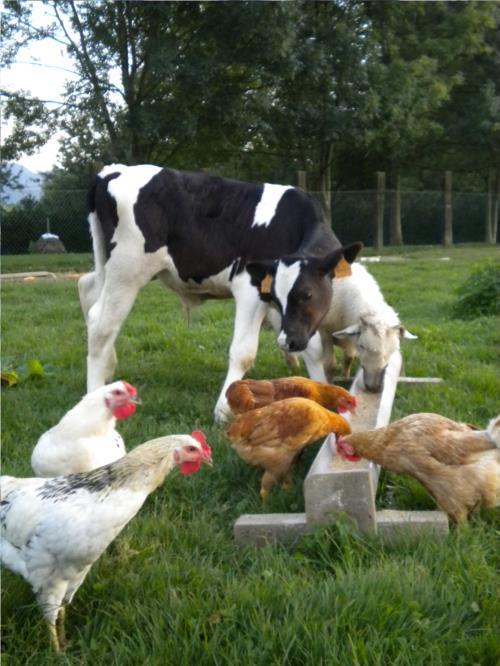 animales 1 casa rural Jesuskoa en Gipuzkoa