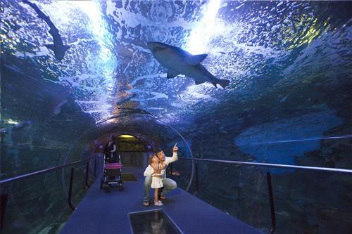aquarium donostia san sebastian gipuzkoa